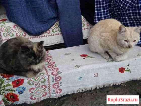 Котят в хорошие ручки Николаевск