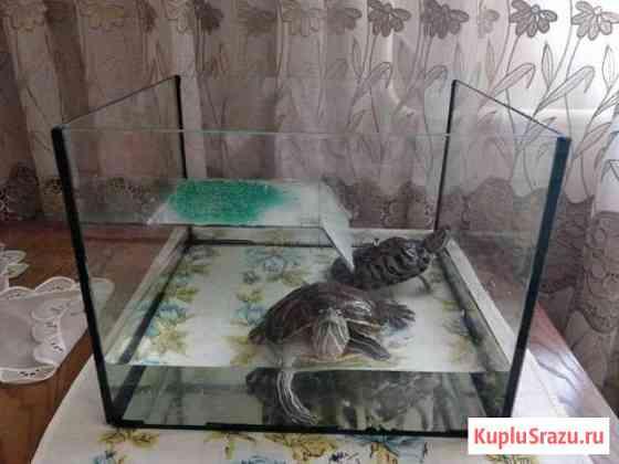 Черепахи Нижнекамск