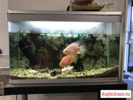 Аквариум с рыбками и фильтром и подставкой Барнаул