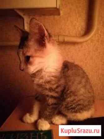 Отдаем котёнка в добрые руки Ангарск