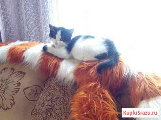 Котёнок Курган