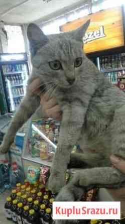 Отдам кошку Братск