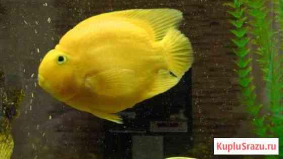Аквариумные рыбки Урюпинск