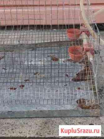 Клетка Соликамск