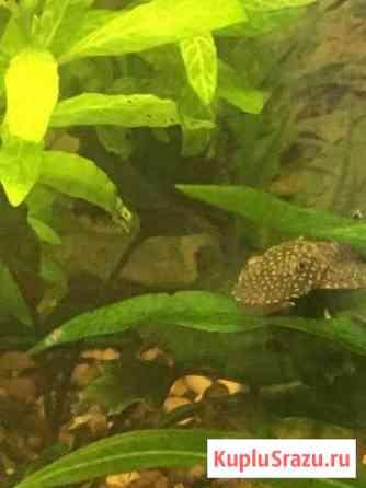 Рыба Пенза