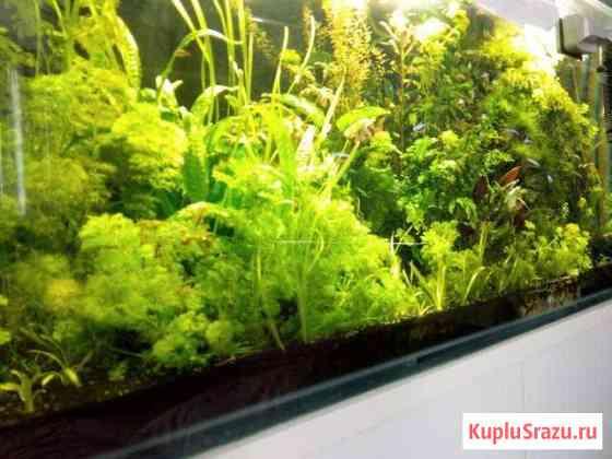 Продам растения в аквариум Самара