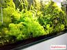 Продам растения в аквариум