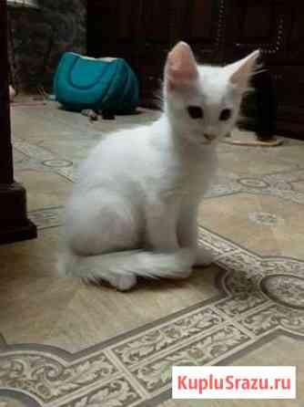 Отдам в хорошие руки котят Астрахань