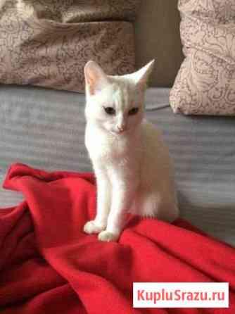 Котёнок Маркова