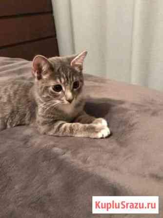 Отдадим котёнка Одинцово