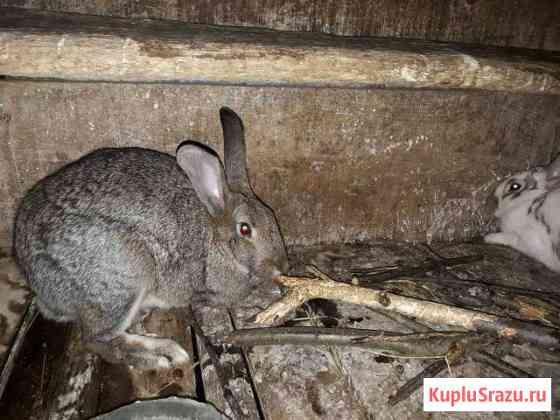 Кролики Сочи