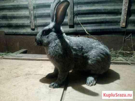 Кролики Омск