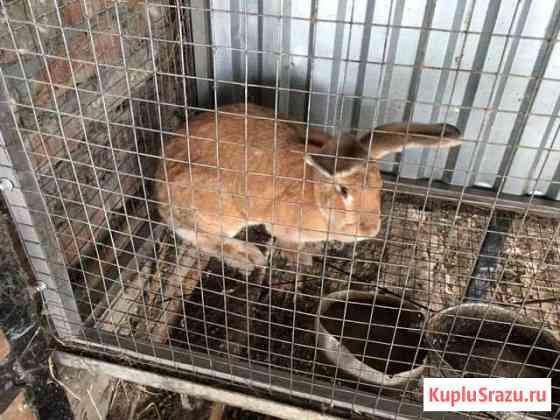 Продам кроликов Хадыженск