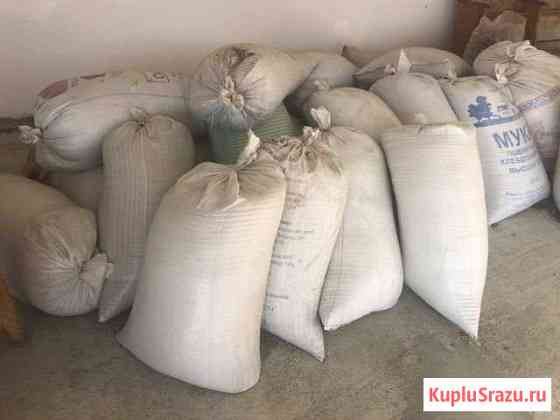 Пшеница Икон-Халк