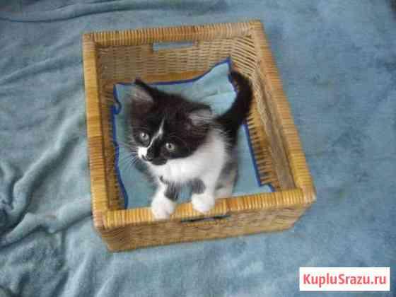 Котенок только для очень очень добрых людей Отрадное