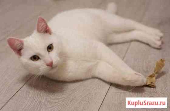 Котик ищет дом Златоуст
