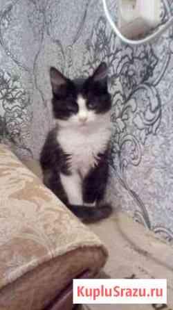 Котёнок девочка в добрые руки Орехово-Зуево