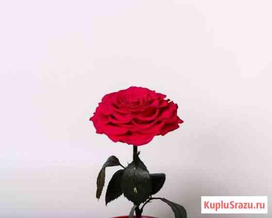 Роза в колбе Краснодар