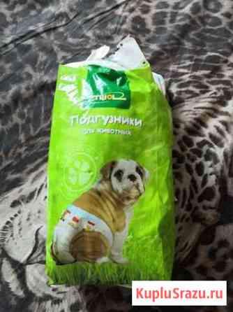 Подгузники для собак Сургут