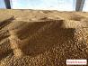 Кукуруза, Семечка, Ячмень, Пшеница