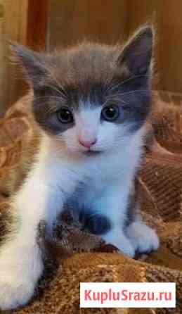 Милые котята в хорошие руки Сафоново