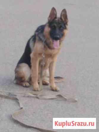 Обучаю собак породистых Краснодар