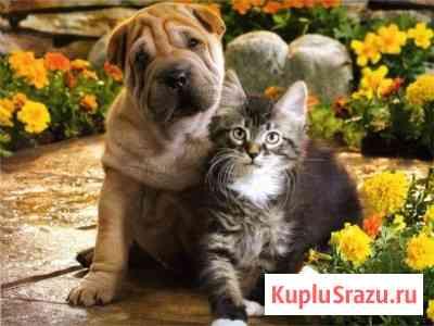 Ветеринар к Вам на дом Санкт-Петербург