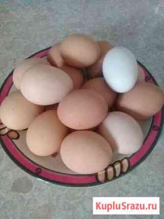 Яйцо Домодедово