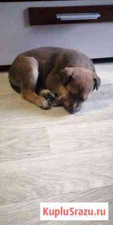 Подарите дом щенку Электрогорск