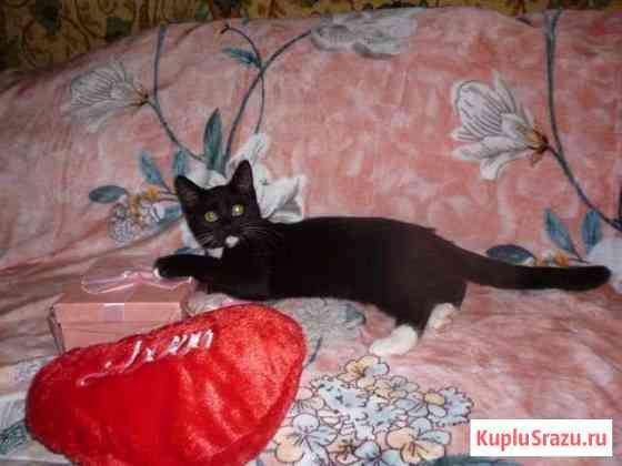 Игривый котенок в добрые руки Домодедово