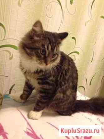 Пропал кот Орехово-Зуево