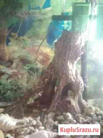 Декор для аквариума коряга Фрязино