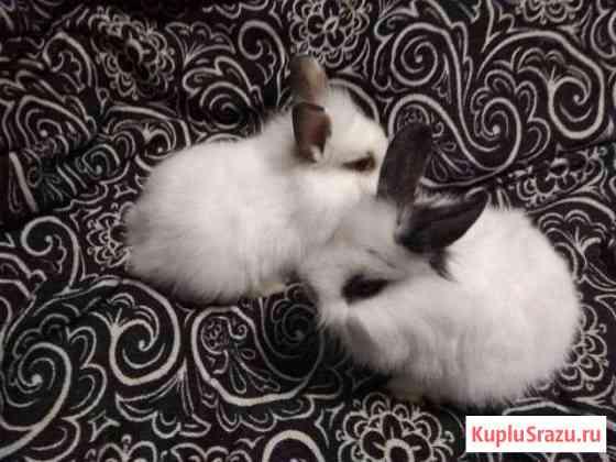 Карликовые декоративные крольчата Москва