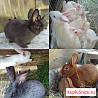 Большой выбор кроликов на любой вкус