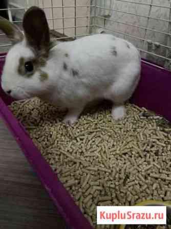 Кролик в добрые руки Москва