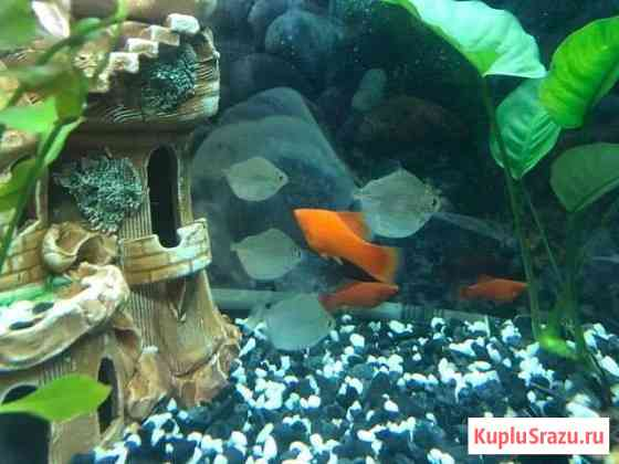 Аквариумные рыбки Домодедово
