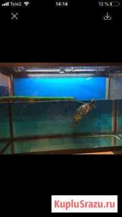 Черепаха с аквариумом на 270 литров Химки
