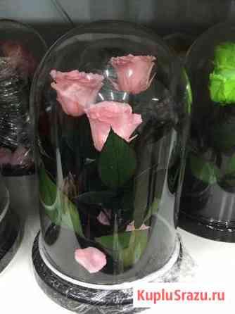 Роза трио стабилизированная Подольск