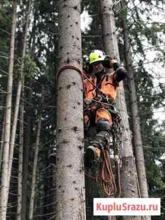 Комплексное удаление деревьев Долгопрудный