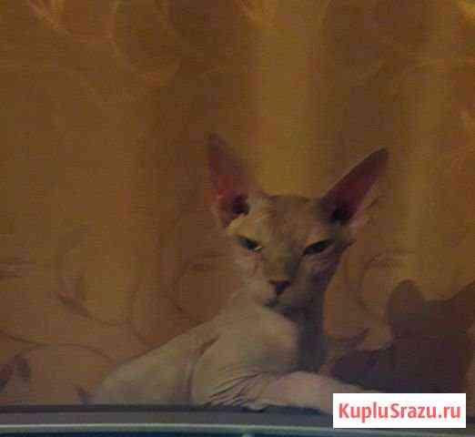Кошка,3 года Семикаракорск