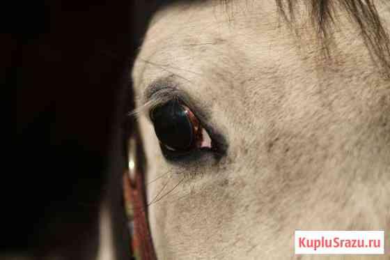 Прекрасные лошади, аренда или продажа Санкт-Петербург