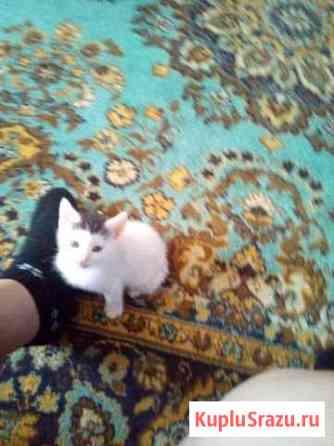 Котик совершенно бесплатно Шахты