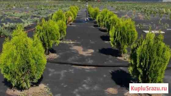 Питомник вечнозеленых и лиственных деревьев и куст Геленджик