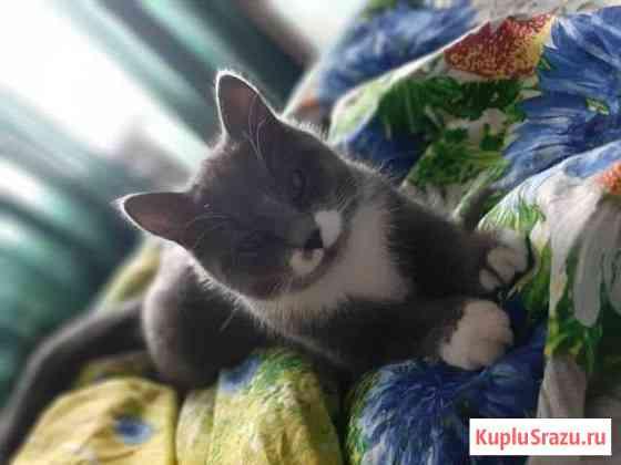Кошка Каменоломни