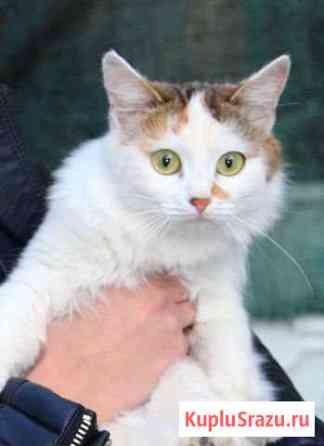 Молоденькая Кошечка, стерилизована Таганрог