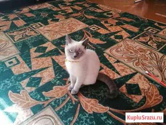 Кот (6 месяцев) Сальск