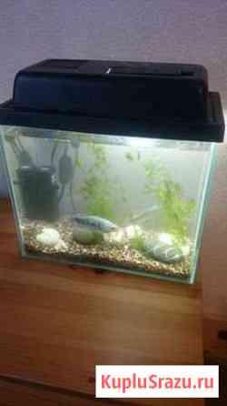 Аквариум с рыбками Аксай