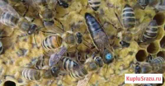 Пчелопакеты 2020 Новошахтинск