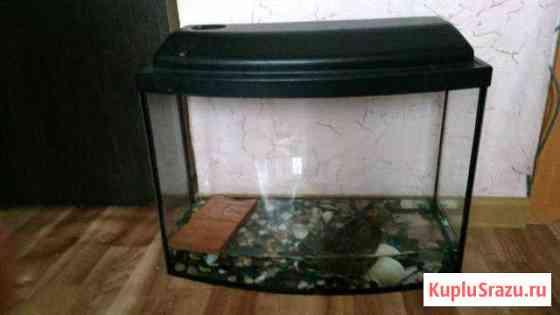 Красноухая черепаха с аквариумом Осиново