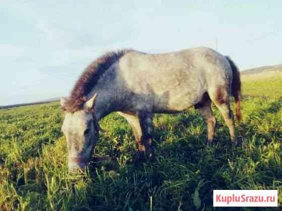 Пони Верх-Нейвинский